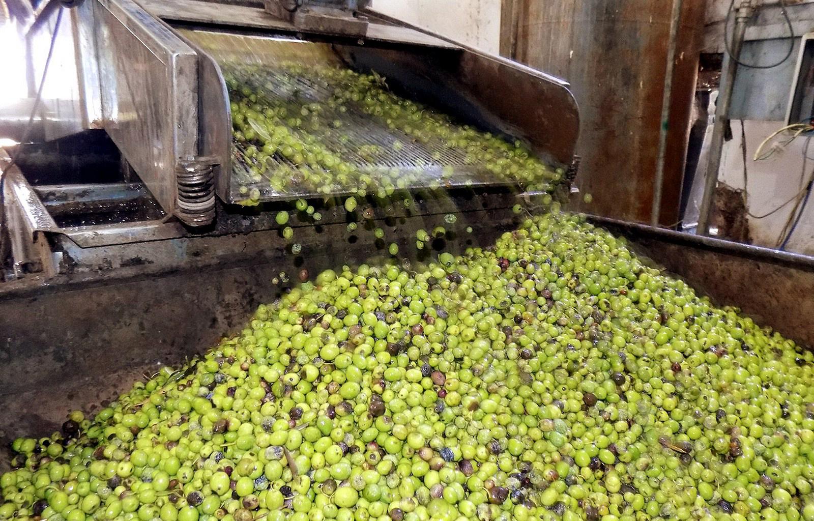 عفرين .. انتشار ظاهرة سرقة معاصر الزيتون ومعامل البيرين