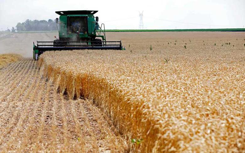 ب ي د يفتح طريق شراء محصول القمح امام النظام