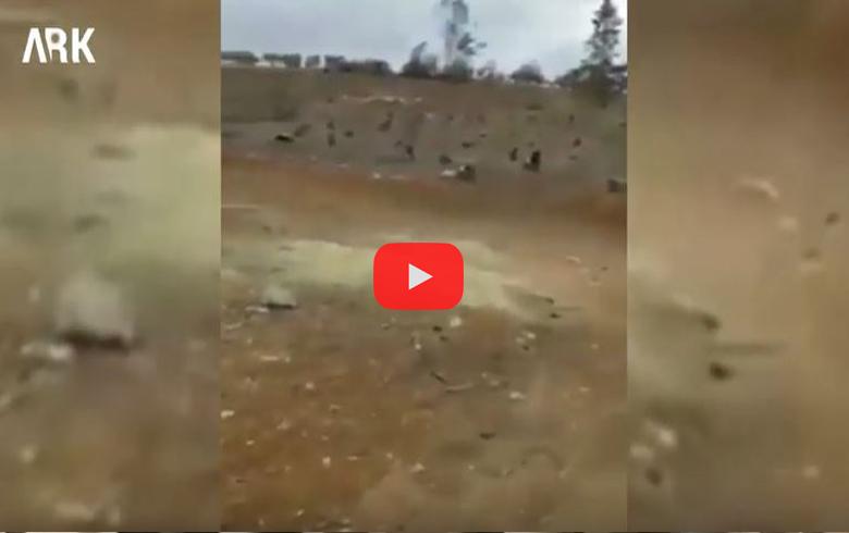 Darên Efrînê ji kok ve têne hilkirin