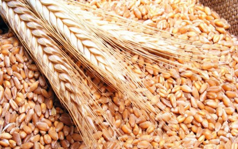 The PYD determines the purchase prices of wheat and barley crop for less than the price of the regime
