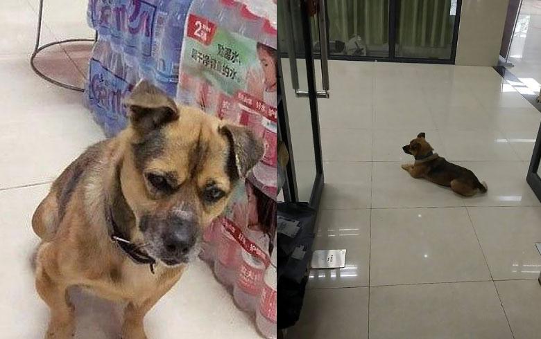 كلب يمكث 3 أشهر في مستشفى بانتظار صاحبه الذي توفي بكورونا