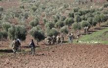 Afrin ... A new decision from the Economic Office of the Sultan Murad Division