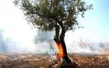 النيران تلتهم جبال راجو